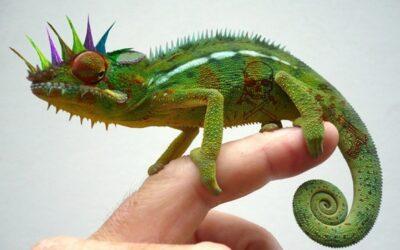 L'iguana dei passi tuoi
